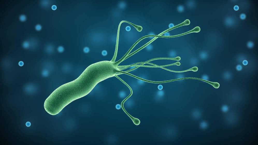 ¿Qué es Helicobacter Pylori y por qué le tienen miedo?